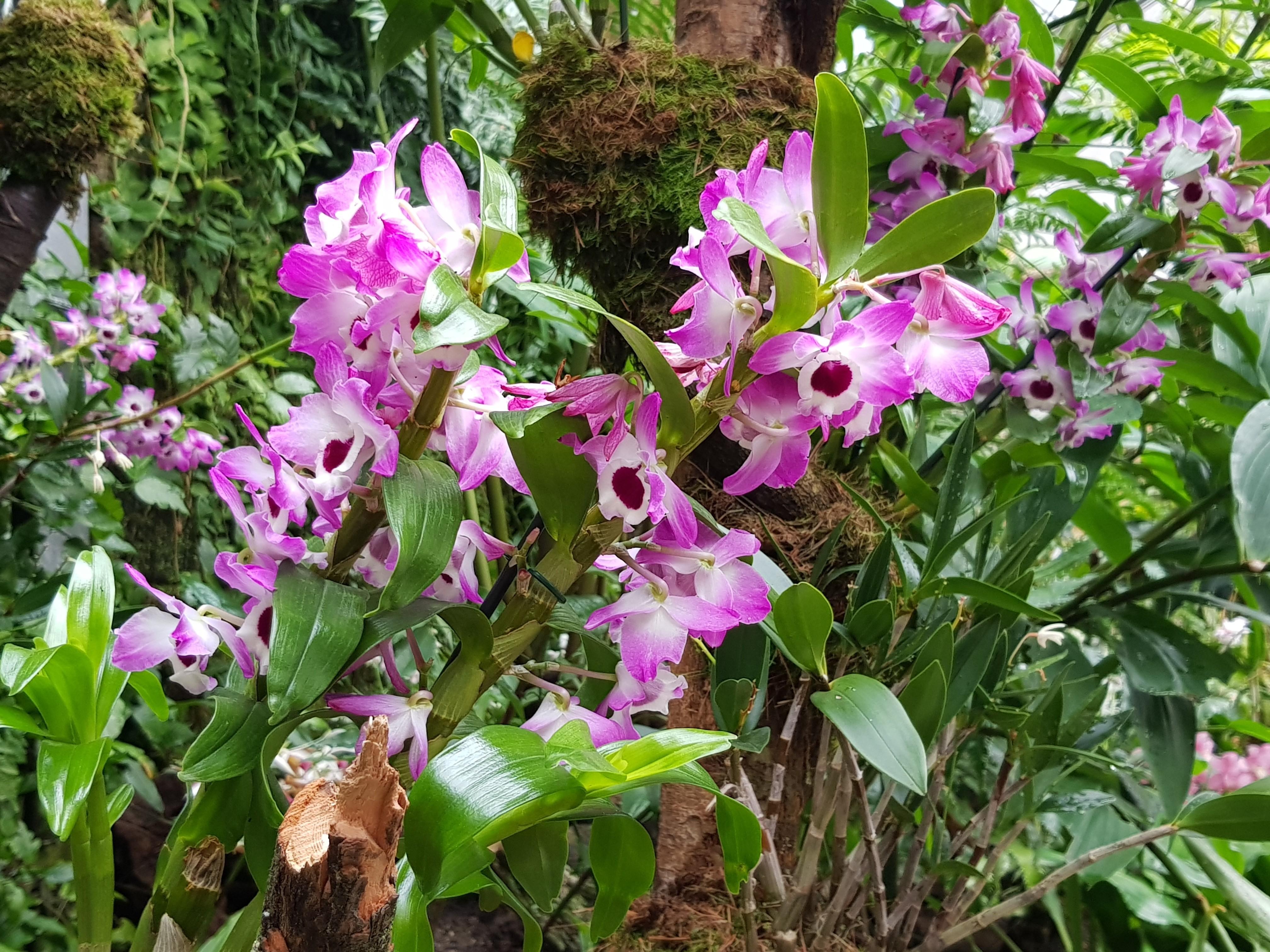 Ботанический сад орхидеи