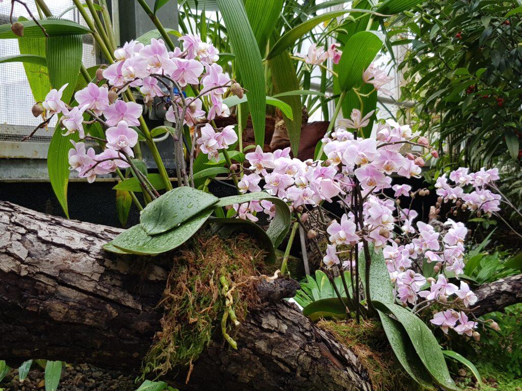 Ботанический сад Лейпцига
