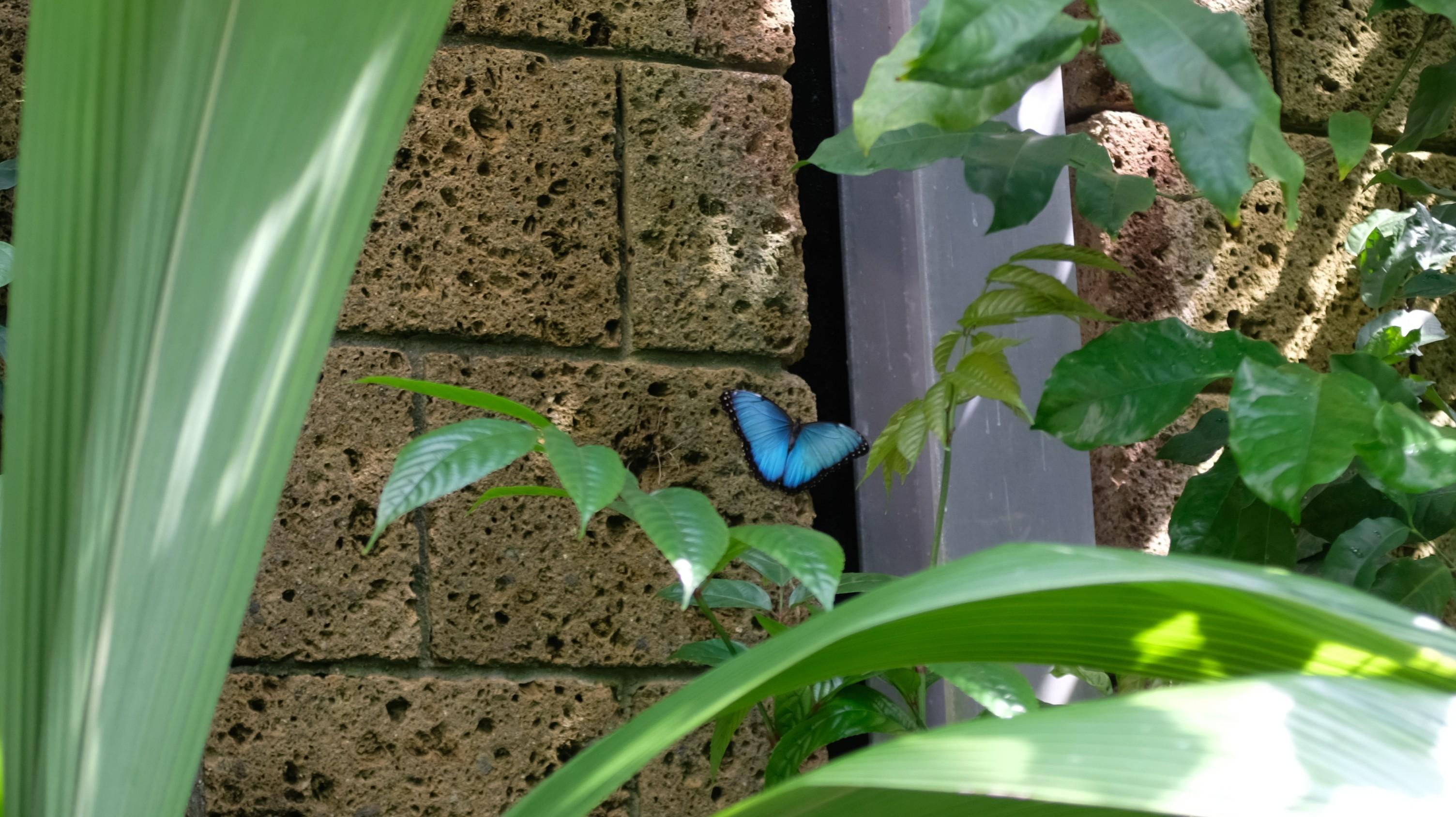 сад бабочек лейпциг
