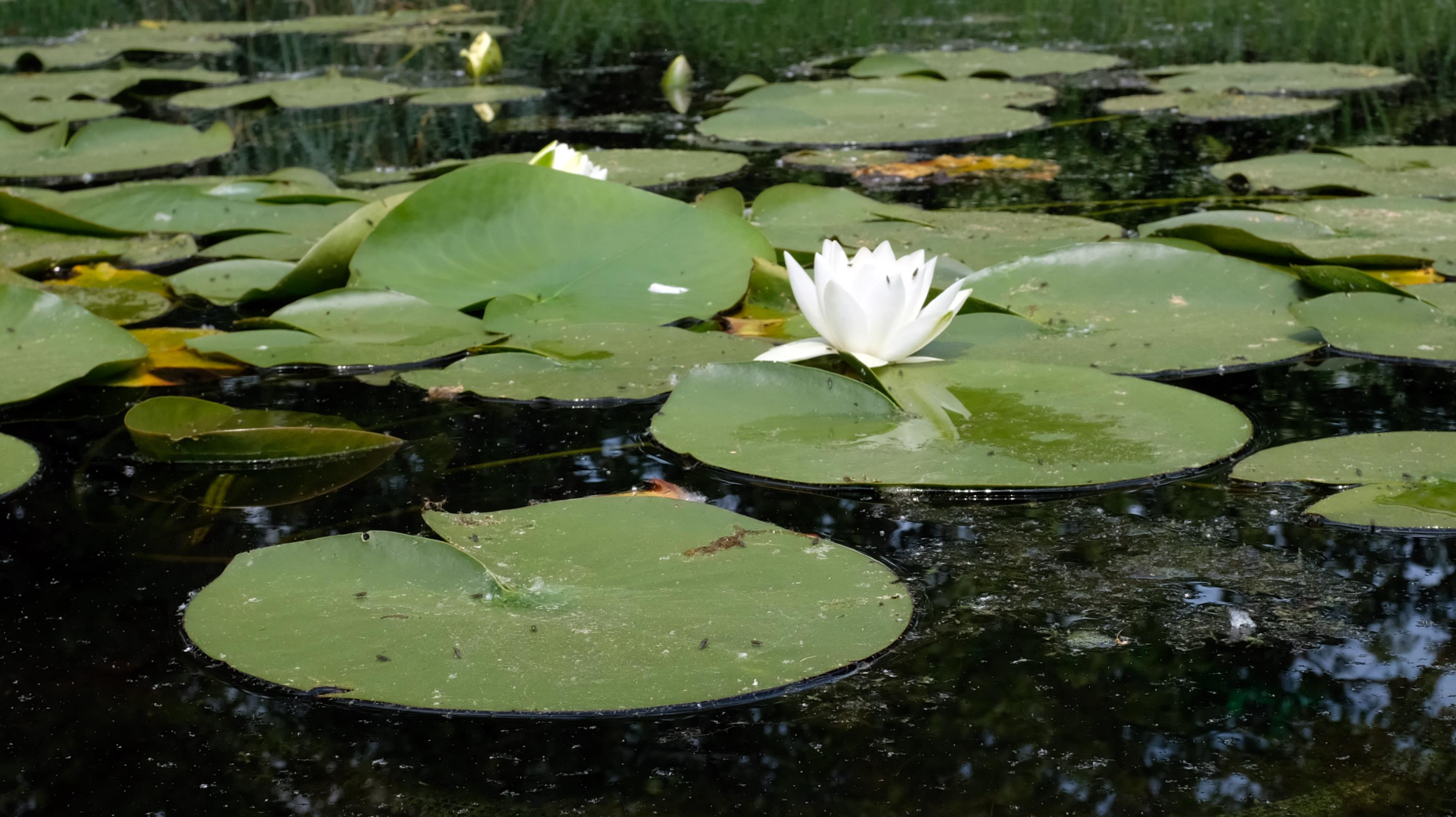 Ботанический сад в Лейпциге